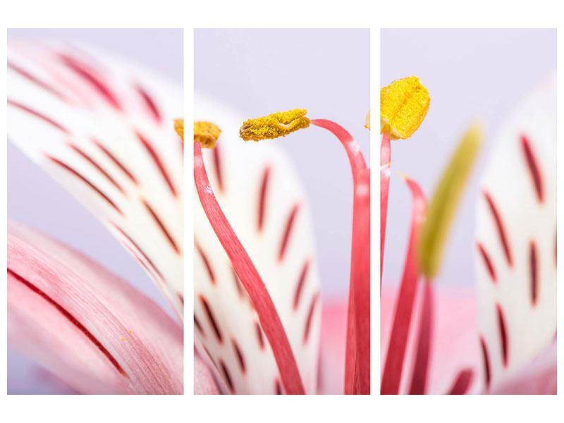 Hartschaumbild 3-teilig Close Up Die exotische Schönheit