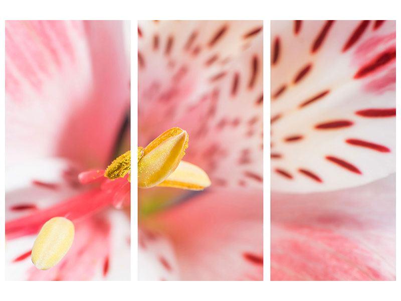 Hartschaumbild 3-teilig Der Lilienstempel