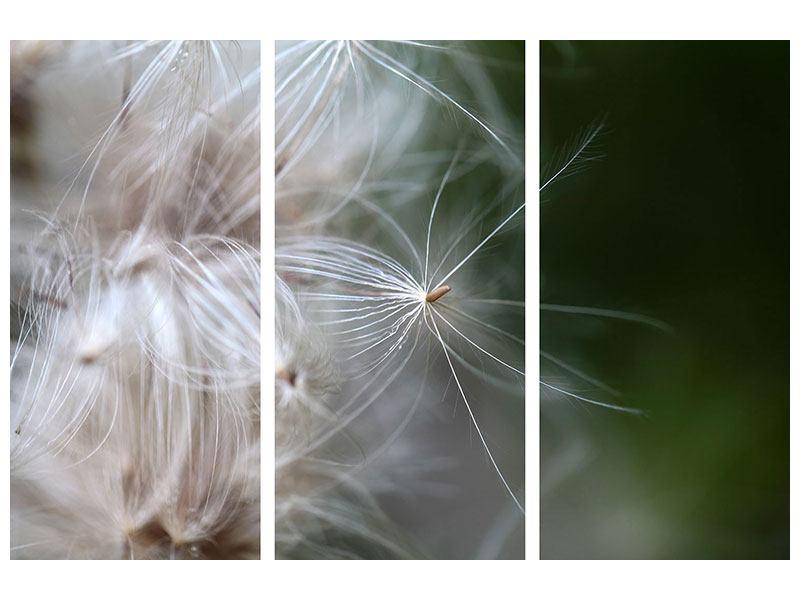 Hartschaumbild 3-teilig Close up Blütenfasern