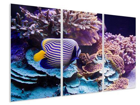 Hartschaumbild 3-teilig Faszination Unterwasser