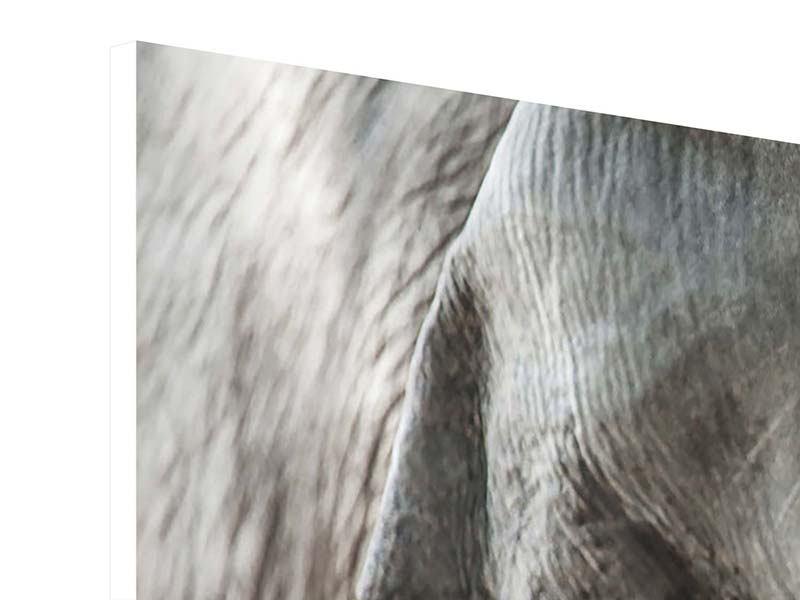Hartschaumbild 3-teilig Close Up Elefant