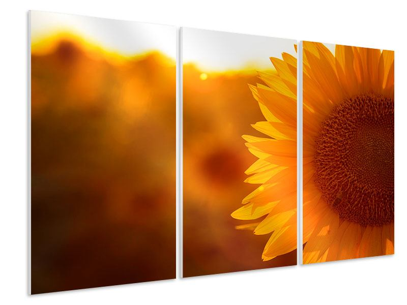 Hartschaumbild 3-teilig Macro-Sonnenblume