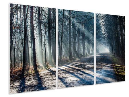 Hartschaumbild 3-teilig Wald im Lichtstrahl
