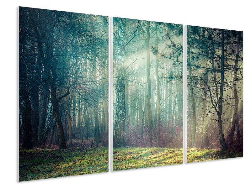 Hartschaumbild 3-teilig Pinienwald