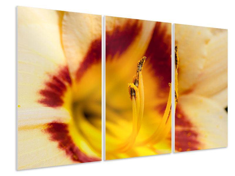 Hartschaumbild 3-teilig Riesenlilie