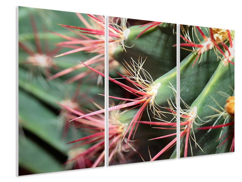 Hartschaumbild 3-teilig Die Kaktusblüte