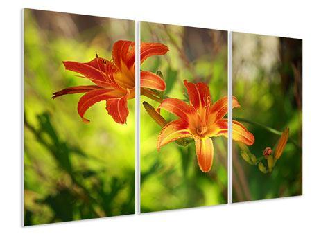 Hartschaumbild 3-teilig Lilien in der Natur