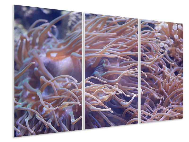 Hartschaumbild 3-teilig Korallenriff