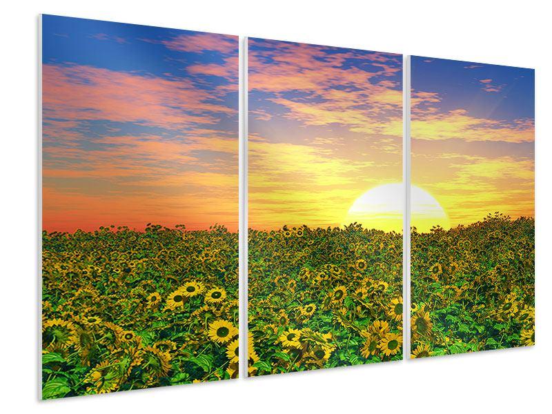 Hartschaumbild 3-teilig Blumenpanorama bei Sonnenuntergang