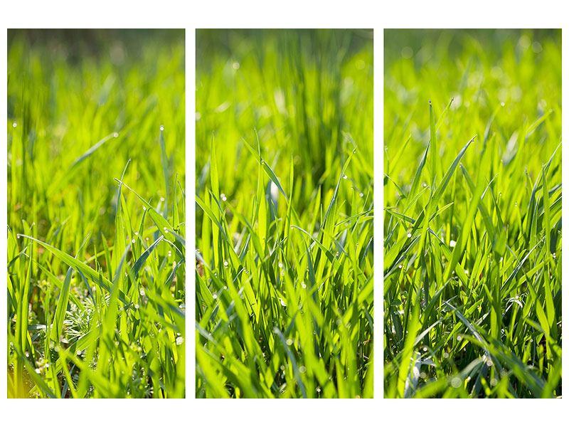 Hartschaumbild 3-teilig Gras im Morgentau