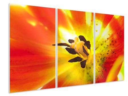 Hartschaumbild 3-teilig Die Narbe einer Tulpe XXL