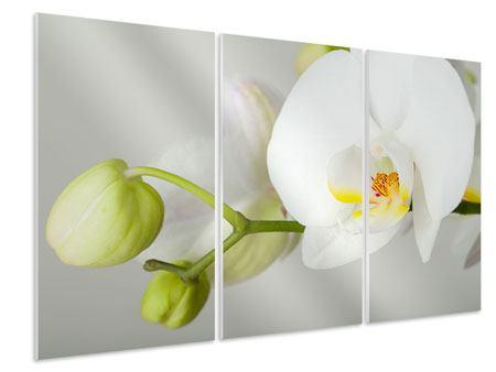 Hartschaumbild 3-teilig Riesenorchidee