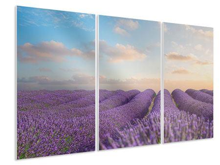 Hartschaumbild 3-teilig Das blühende Lavendelfeld