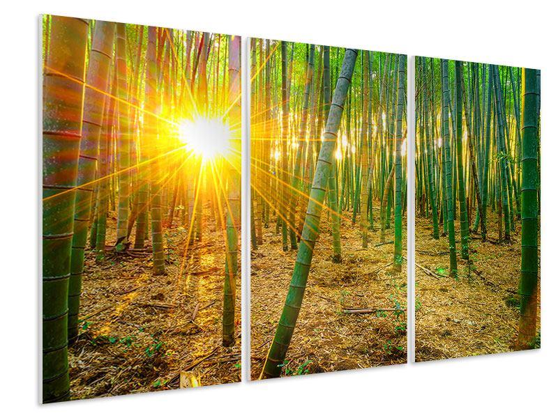 Hartschaumbild 3-teilig Bambusse