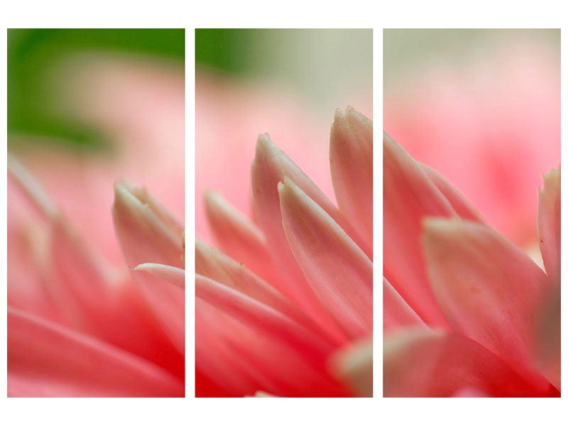 Hartschaumbild 3-teilig Close Up einer Blüte