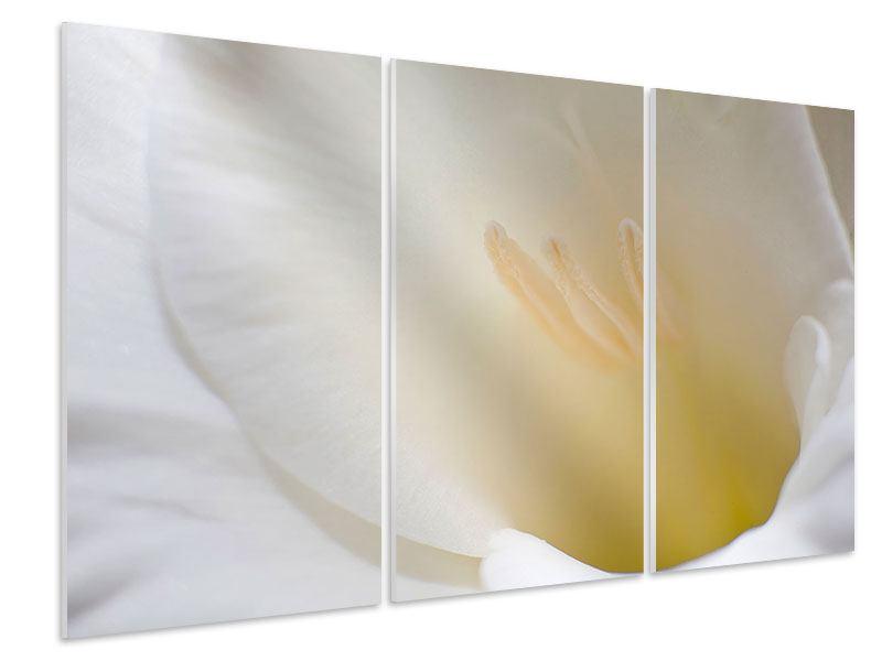 Hartschaumbild 3-teilig In einer Blüte