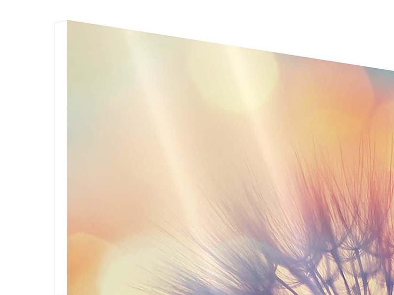 Hartschaumbild 3-teilig Die Pusteblume im Licht