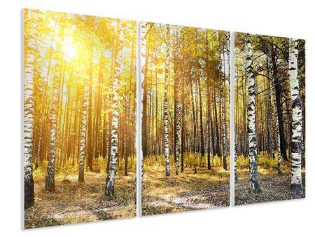 Hartschaumbild 3-teilig Birkenwald