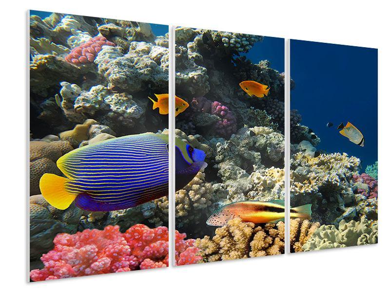 Hartschaumbild 3-teilig Das Aquarium