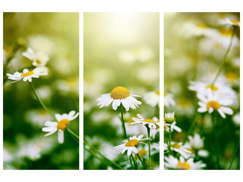 Hartschaumbild 3-teilig Die Gänseblümchen