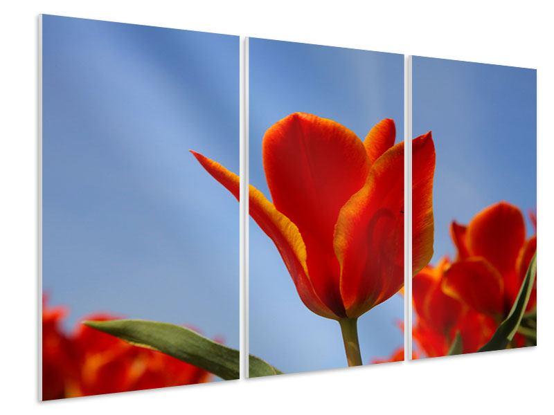 Hartschaumbild 3-teilig Rote Tulpen in XXL