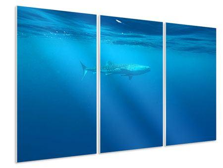 Hartschaumbild 3-teilig Der Walhai