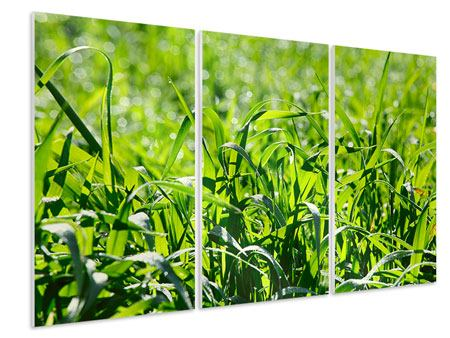 Hartschaumbild 3-teilig Sonniges Gras