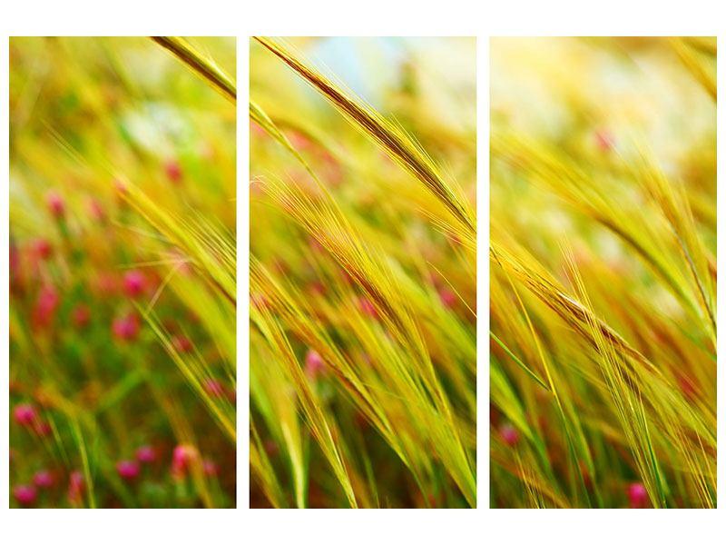 Hartschaumbild 3-teilig Das Weizenfeld