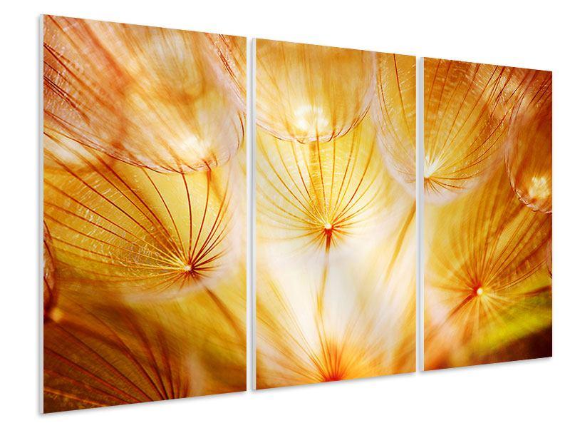 Hartschaumbild 3-teilig Close Up Pusteblume im Licht