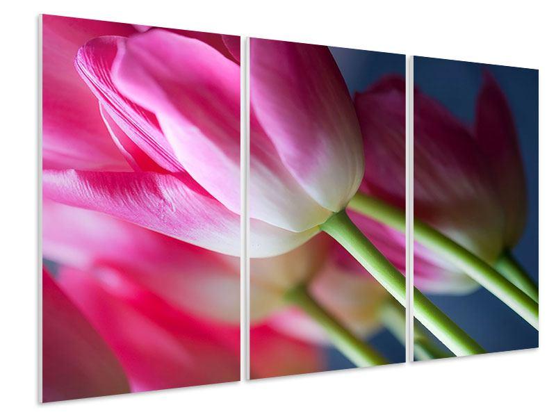 Hartschaumbild 3-teilig Makro Tulpen