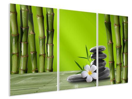 Hartschaumbild 3-teilig Der Bambus
