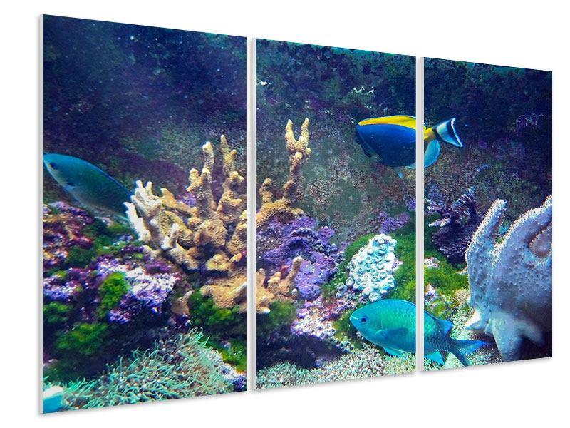 Hartschaumbild 3-teilig Fische