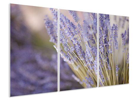 Hartschaumbild 3-teilig Lavendel XXL