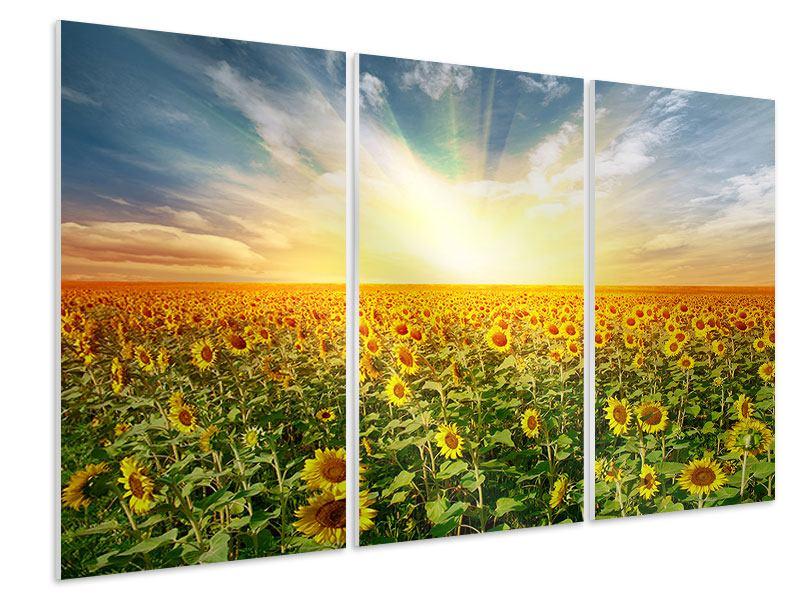 Hartschaumbild 3-teilig Ein Feld voller Sonnenblumen
