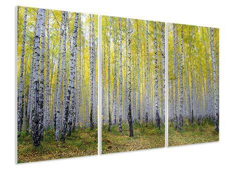 Hartschaumbild 3-teilig Herbstlicher Birkenwald