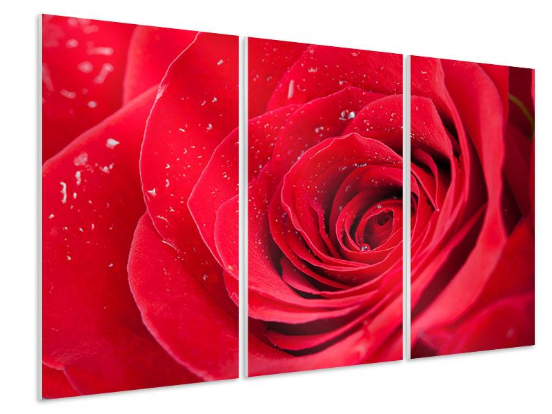 Hartschaumbild 3-teilig Rote Rose im Morgentau