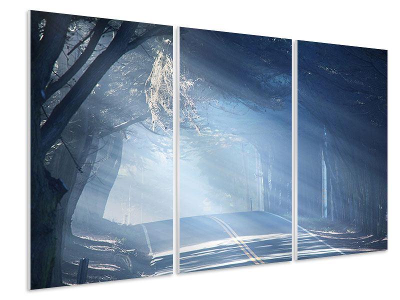 Hartschaumbild 3-teilig Lichtdurchflutete Baumallee
