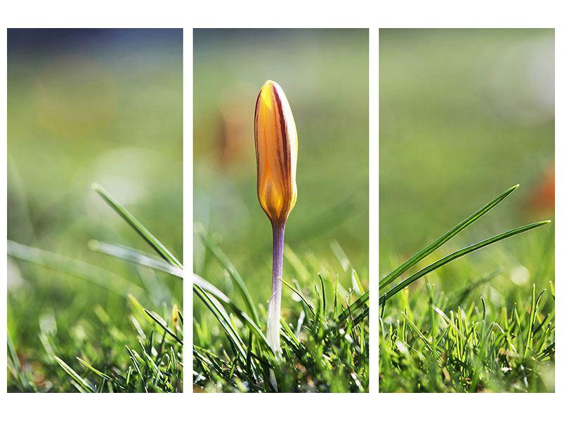 Hartschaumbild 3-teilig Die Blütenknospe
