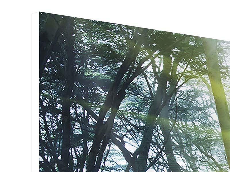 Hartschaumbild 3-teilig Sonnenstrahlen im Wald