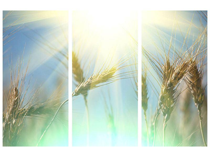 Hartschaumbild 3-teilig König des Getreides