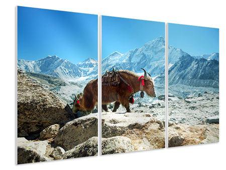 Hartschaumbild 3-teilig Das Himalaya-Gebirge