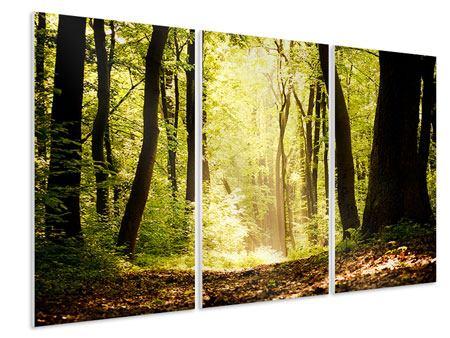 Hartschaumbild 3-teilig Sonnenaufgang im Wald