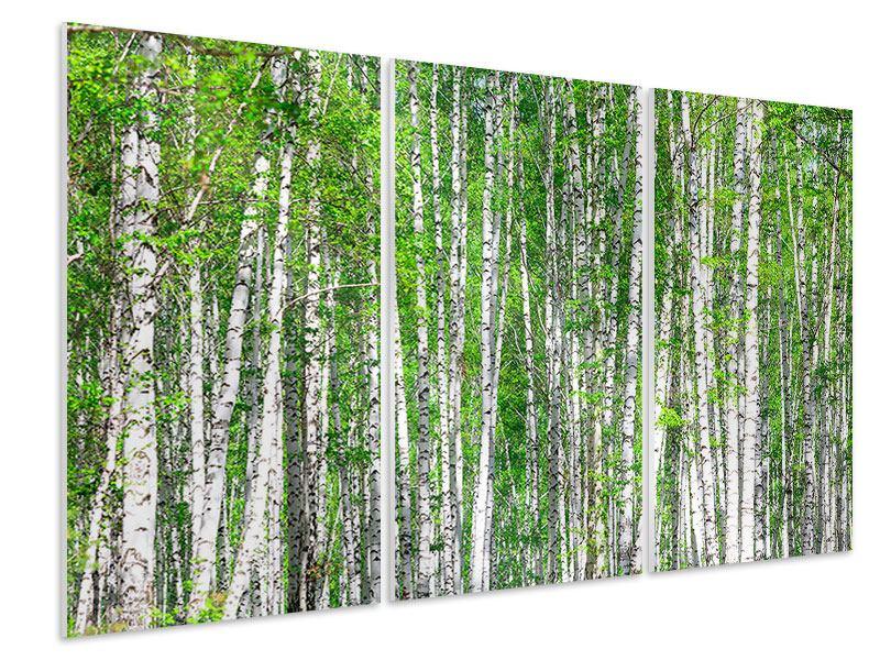 Hartschaumbild 3-teilig Der Birkenwald