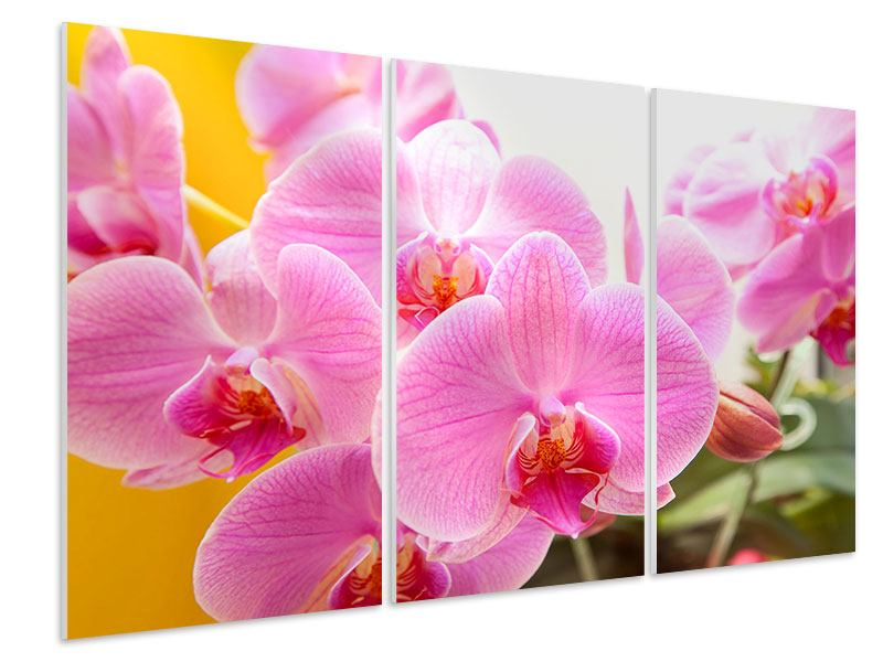 3 Piece Forex Print Royal Orchid