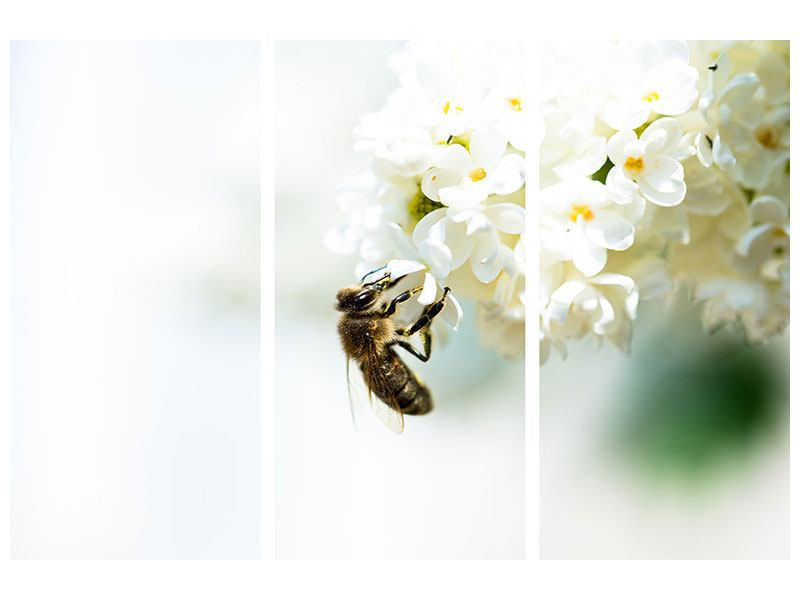 Hartschaumbild 3-teilig Die Hummel und die Blüte