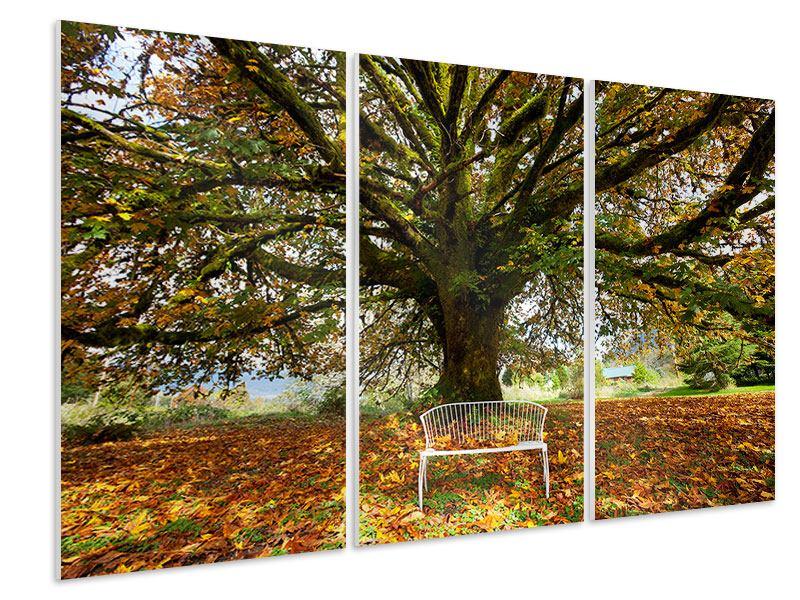 Hartschaumbild 3-teilig Mein Lieblingsbaum