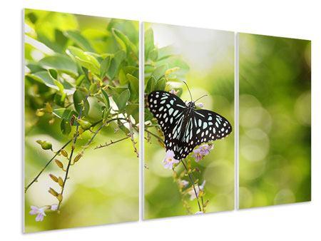 Hartschaumbild 3-teilig Papilio Schmetterling XXL