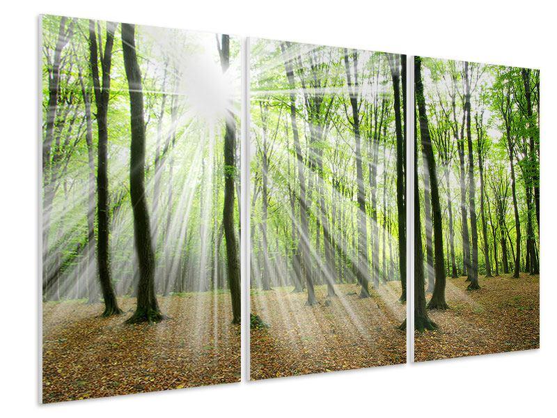 Hartschaumbild 3-teilig Magisches Licht in den Bäumen