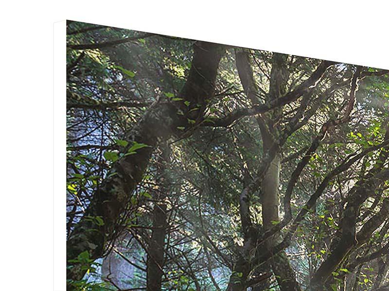 Hartschaumbild 3-teilig Sonniger Waldweg