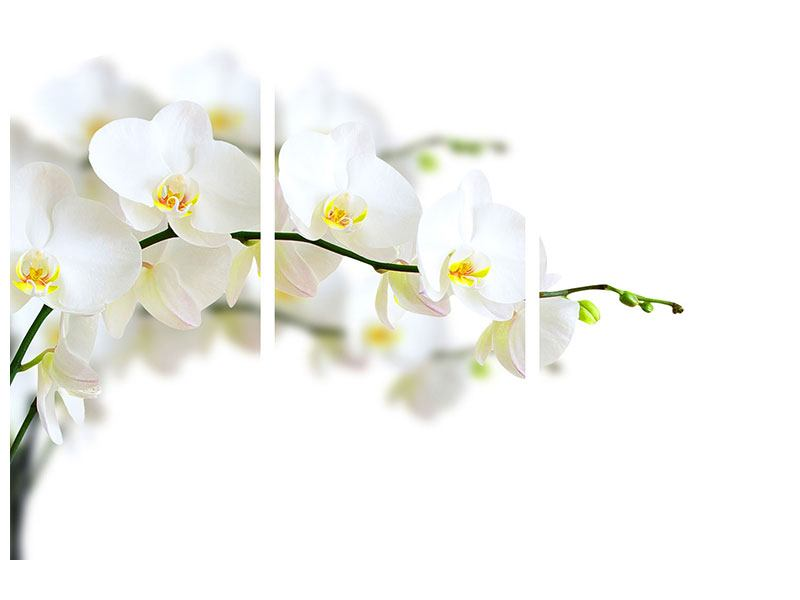 Hartschaumbild 3-teilig Weisse Orchideen